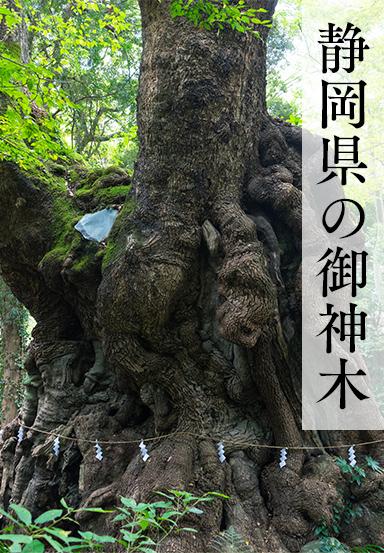 静岡県の御神木